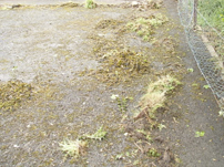 example of moss and weed kill